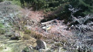 停止中:香川県琴平町 金刀比羅宮の桜の名所「桜馬場(さくらのばば)」ライブカメラと雨雲レーダー
