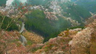 吉野桜と町並みライブカメラと雨雲レーダー/奈良県吉野町