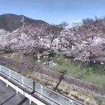新田公園の桜並木ライブカメラ