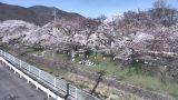 新田公園の桜並木ライブカメラと雨雲レーダー/長野県上田市