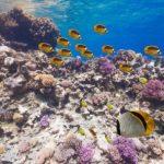 水中できれいな魚に囲まれる紅海の360度パノラマカメラ