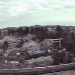 鶴岡公園がみえるライブカメラ