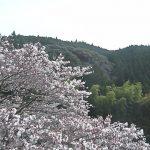 水上村役場の桜ライブカメラ