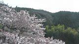 水上村役場の桜ライブカメラと雨雲レーダー/熊本県水上村