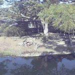 フェニックス自然動物園のワオキツネザルライブカメラ