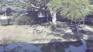 フェニックス自然動物園のワオキツネザルライブカメラと雨雲レーダー/宮崎県宮崎市