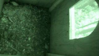 フクロウ巣箱ライブカメラと雨雲レーダー/長野県飯綱町
