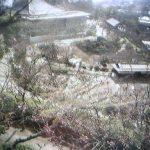 千光寺山頂周辺の桜ライブカメラ(期間限定)