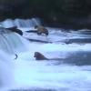 カトマイ国立公園のクマの鮭狩りが見れるライブカメラ