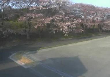リバーライン(商工会裏桜並木)付近ライブカメラ