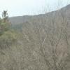 木曽文化公園の桜ライブカメラ