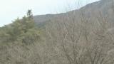 木曽文化公園の桜ライブカメラと雨雲レーダー/長野県木曽町