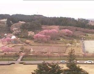 日本国花苑ライブカメラ
