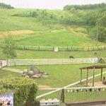 ビバアルパカ牧場ライブカメラ