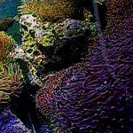 サンシャイン水族館のクマノミ水槽ライブカメラ(USTREAM)