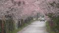 太山寺しだれ桜ライブカメラと雨雲レーダー/栃木県栃木市