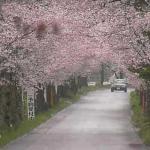 太平山遊覧道路ライブカメラ