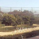 フェニックス自然動物園のフラミンゴショー会場ライブカメラ