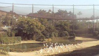 フェニックス自然動物園のフラミンゴショー会場ライブカメラと雨雲レーダー/宮崎県宮崎市
