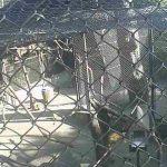 フェニックス自然動物園のリスザルライブカメラ