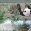 上野動物園のパンダライブカメラ