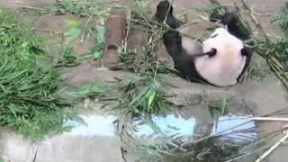 上野動物園パンダ(シャンシャンとシンシン)ライブカメラと雨雲レーダー/東京都台東区