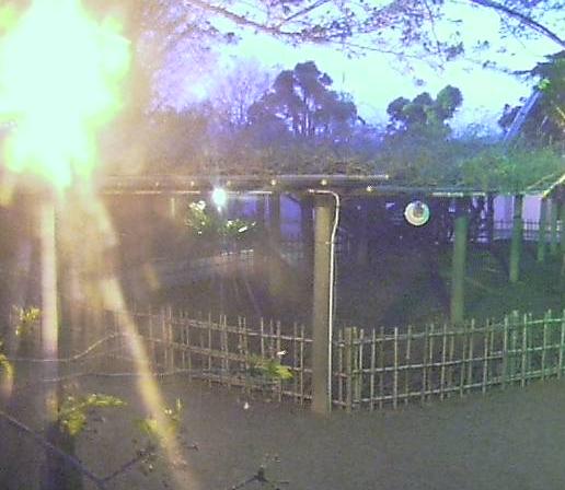 佐賀県唐津市 唐津城 藤の花 ライブカメラと雨雲レーダー