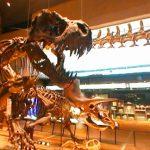 いのちのたび博物館の360度パノラマカメラ