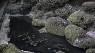 霊桃寺裏庭ライブカメラと雨雲レーダー/岩手県奥州市