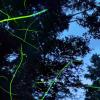 志賀高原の蛍360度パノラマカメラ