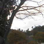 徳島県立神山森林公園イルローザの森ライブカメラ