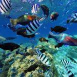 ダイビング好きにおすすめ!ニューカレドニアの魚だらけの360度パノラマカメラ