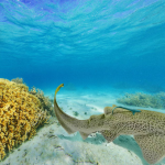 ニューカレドニア島ブロニーの海360度パノラマカメラ