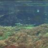 上高地ビジターセンター 清水川の水中ライブカメラ
