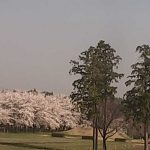 大胡ぐりーんふらわー牧場の桜ライブカメラ