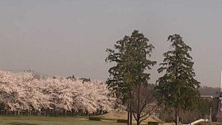 大胡ぐりーんふらわー牧場の桜ライブカメラと雨雲レーダー/群馬県前橋市