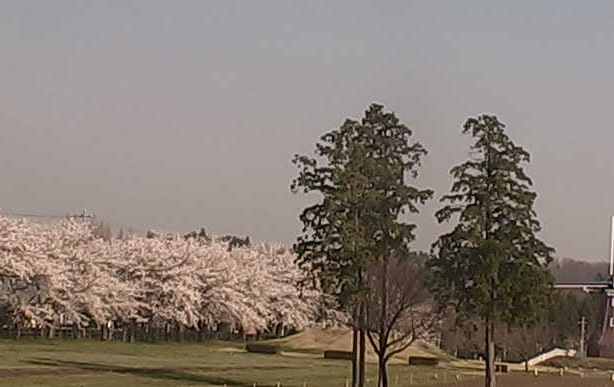 群馬県前橋市 大胡ぐりーんふらわー牧場の桜ライブカメラと雨雲レーダー