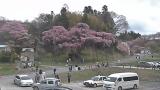 紅枝垂地蔵桜ライブカメラと雨雲レーダー/福島県郡山市
