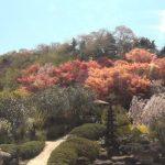 花見山公園ライブカメラ