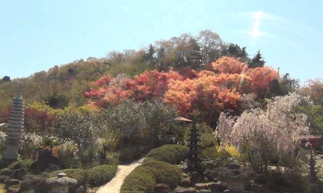 花見山公園ライブカメラと雨雲レーダー/福島県福島市
