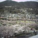 城山公園ライブカメラ