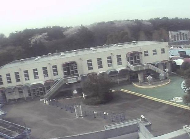 さいたま水上公園・プール・駐車場と桜 ライブカメラと雨雲レーダー/埼玉県上尾市