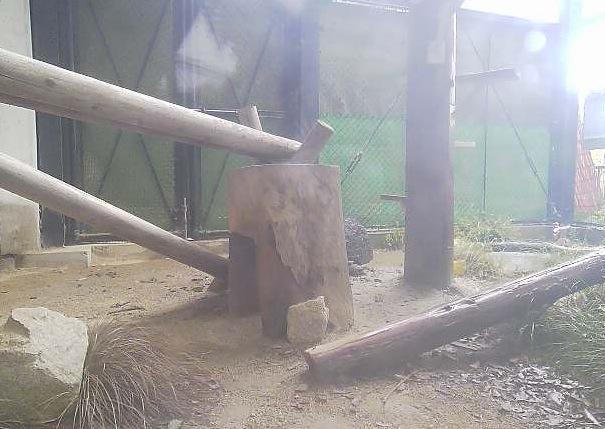福岡市動物園のツシマヤマネコライブカメラ