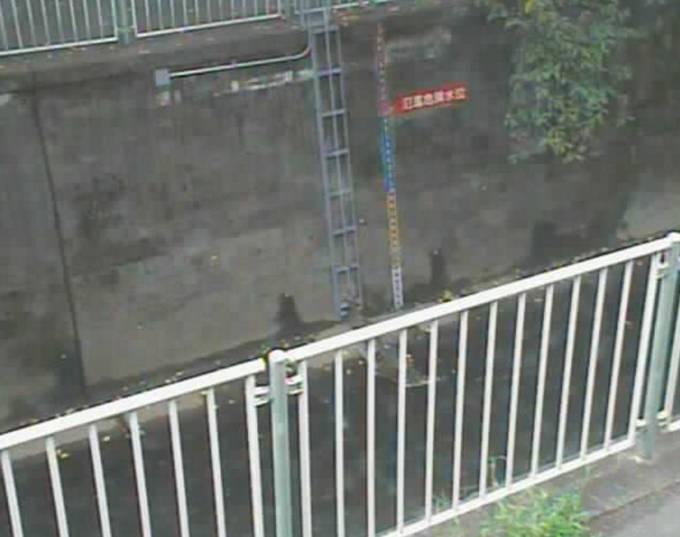 神田川 ライブカメラ(番屋橋)と雨雲レーダー/東京都杉並区