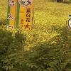 菜の花ライブカメラ