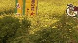 停止中:青森県横浜町 菜の花ライブカメラと雨雲レーダー