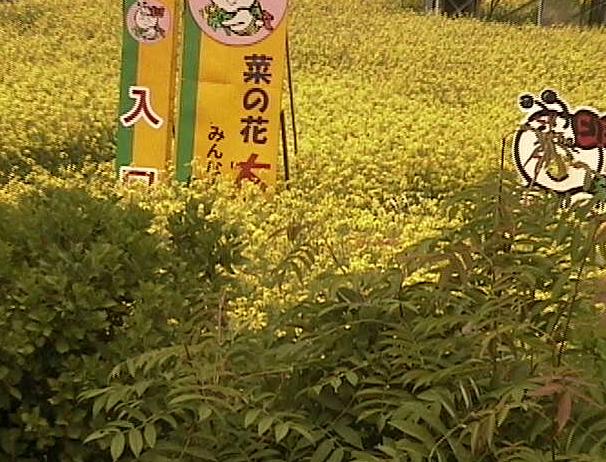 停止中:菜の花ライブカメラと雨雲レーダー/青森県横浜町
