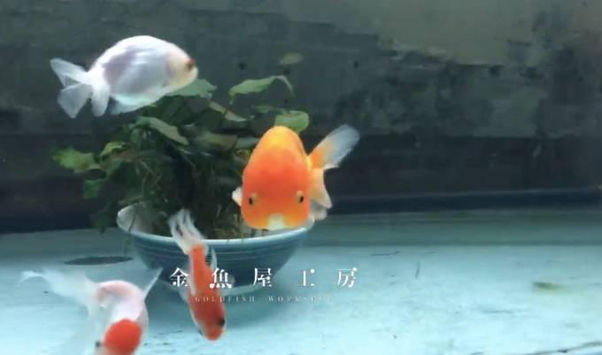 金魚屋工房ライブカメラと雨雲レーダー/大阪府大阪市