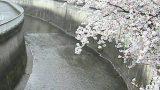 石神井川 ライブカメラ(栗原橋)と雨雲レーダー/東京都板橋区