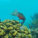 ケイマン諸島のサンゴ礁ライブカメラ